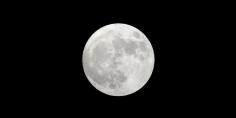 تكهنات حول توقيع رجل أعمال ياباني عقد مع شركة فضاء أمريكية للقيام برحلة حول القمر